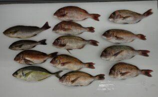 ジャンボフィッシング村、色々、釣れてます