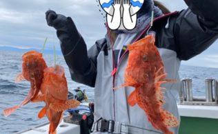 2020/03/16 土肥港 オニカサゴ【8匹】