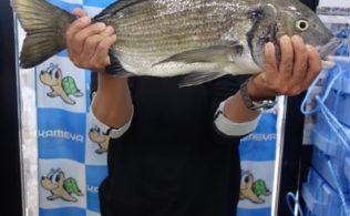 2019/6/22 志布志 チヌ 53.3cm