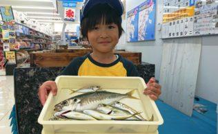 串木野港 サビキで大漁!!