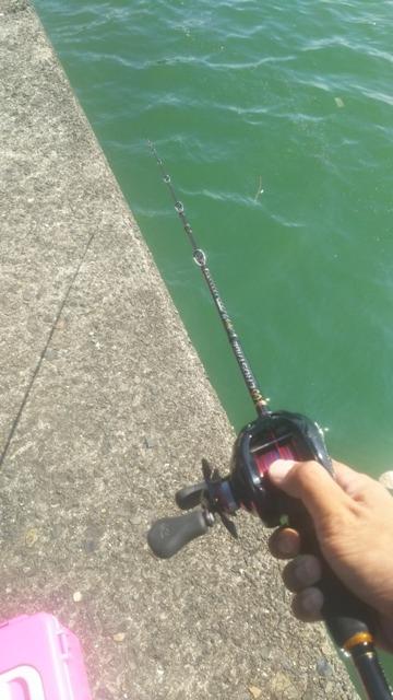 タコ 釣り 時間