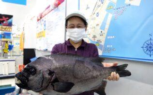 南薩方面にて良型の石鯛の釣果!! 鹿児島谷山店