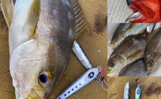 2021/05/11 日南沖 釣果 イサキ釣れてます。 遊漁船 海響丸