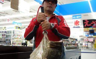 釣果情報 5月7日 アラ111cm、22kg