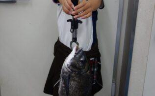 宮崎港で良型黒鯛の釣果!!宮崎店