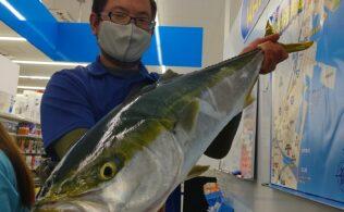 錦江湾での釣果!大型のブリのお持ち込みをして頂きました‼ 鹿児島谷山店