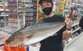 北埠頭沖堤防にてカンパチの釣果頂きました!鹿児島城南店