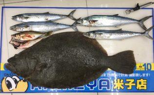 【緊急釣果速報】化物ヒラメ、尺アジ、サゴシ