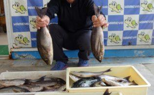 2020/06/28 釣場 高島 魚種 イサキ、グレ
