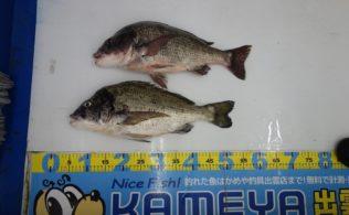 2020.9.13 宍道湖 黒鯛