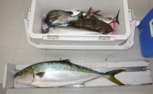 初釣りでの釣果