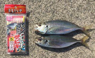 呉市 阿賀方面にてアジの釣果