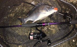 旭川周辺チニング釣れてます!