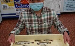 2021.4/1 西城川支流熊野川 ヤマメ13匹